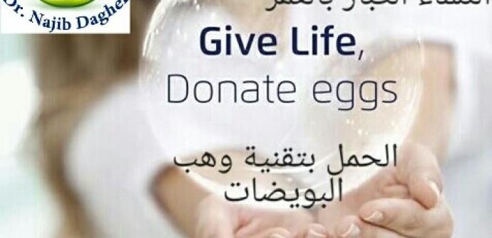 Egg donation, Egg donation in Lebanon